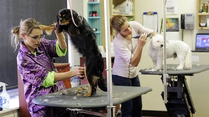 como montar tienda de animales