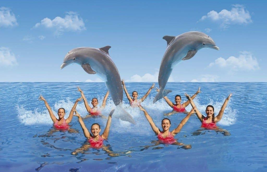 1499422002 nuevo show delfines mundomar 1