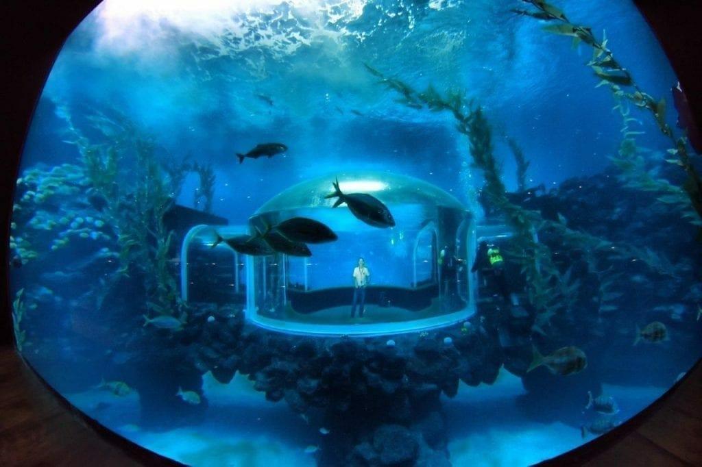 1515178678 El Acuario Poema del Mar abre sus puertas al p blico el 8 de enero 4