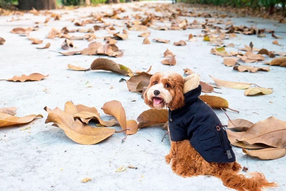 Aristopet da las claves para que las mascotas no pasen frío