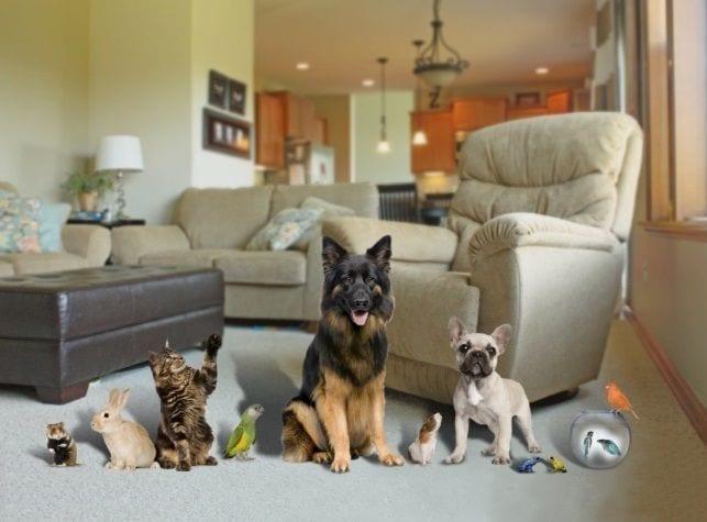 1566990737 Mascotas en casa