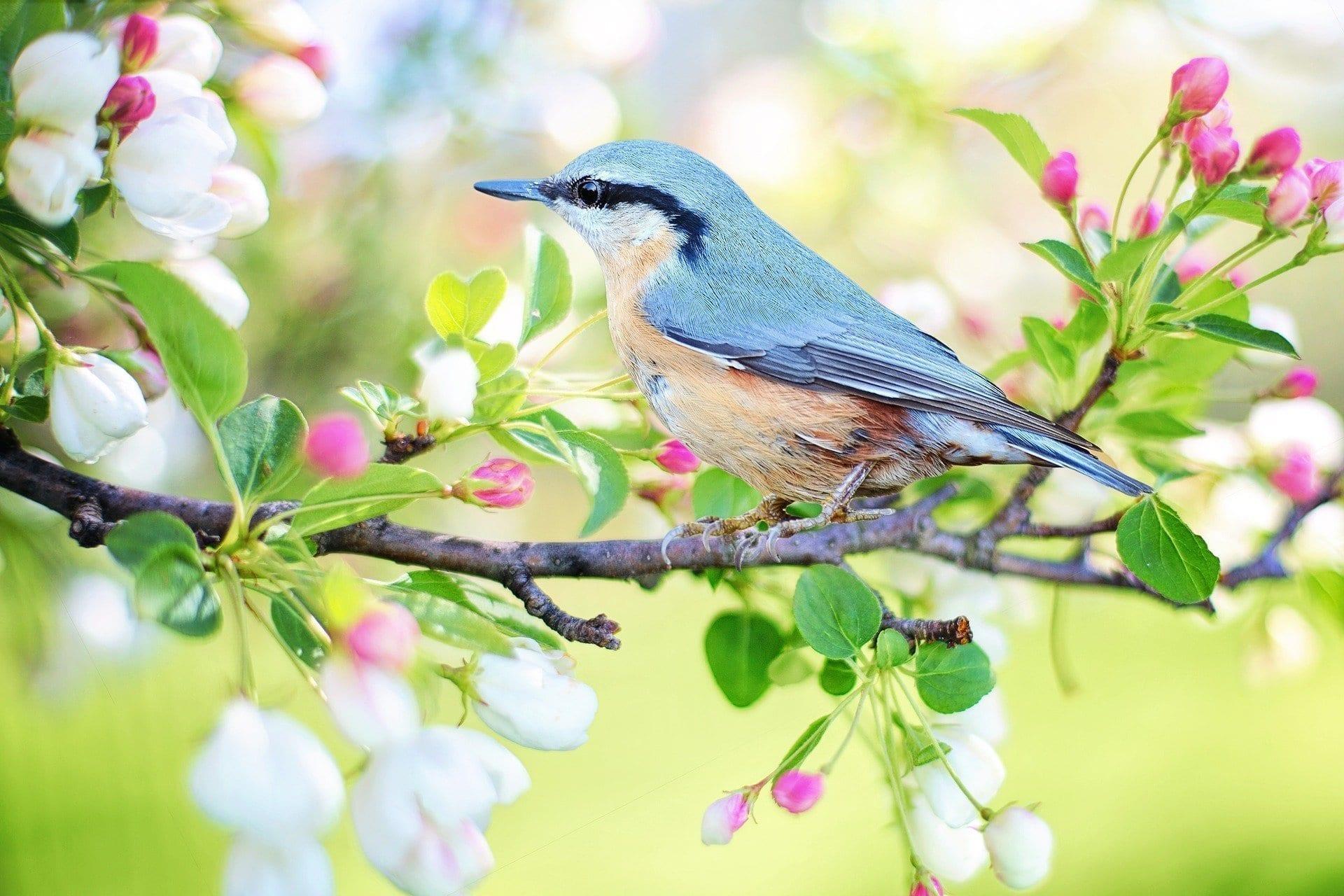 spring bird 2295431 1920